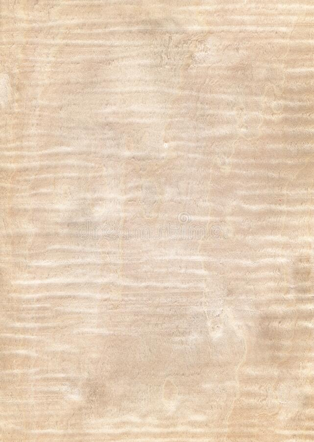 Natural wooden texture backgroun, maple wood royalty free stock photo