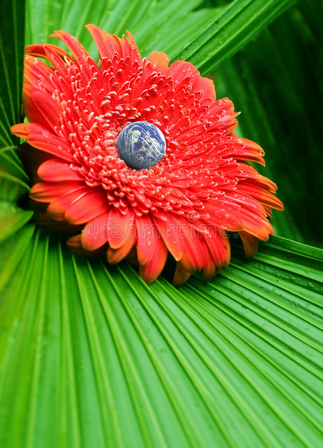 Natural world. Protect our world environment concept with globe on red gerber daisy and leaf background stock image