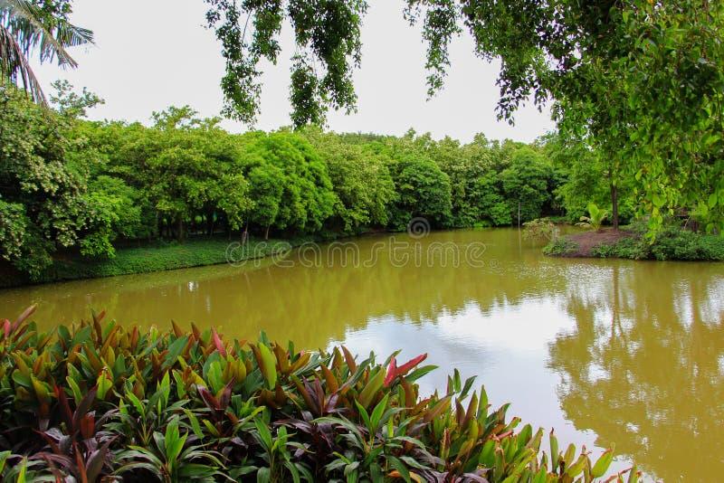Download Naturale abbondante fotografia stock. Immagine di foresta - 56879470