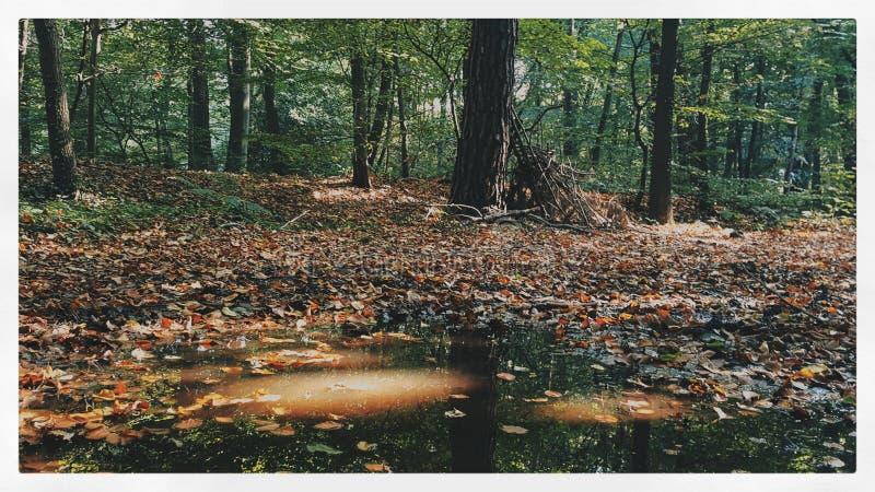 Naturaleza imagenes de archivo