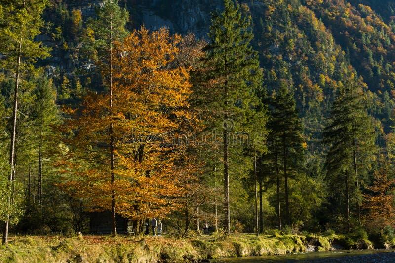 Naturaleza agradable de los colores del otoño del verano tardío imagen de archivo libre de regalías