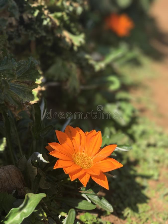 naturaleza amarilla de la flor imagen de archivo
