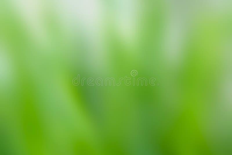Naturaleza blanca y verde borrosa hermosa para el fondo y la textura foto de archivo