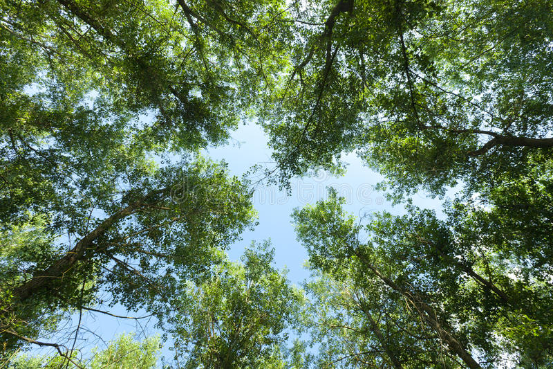 Naturaleza Bosque fotos de archivo libres de regalías