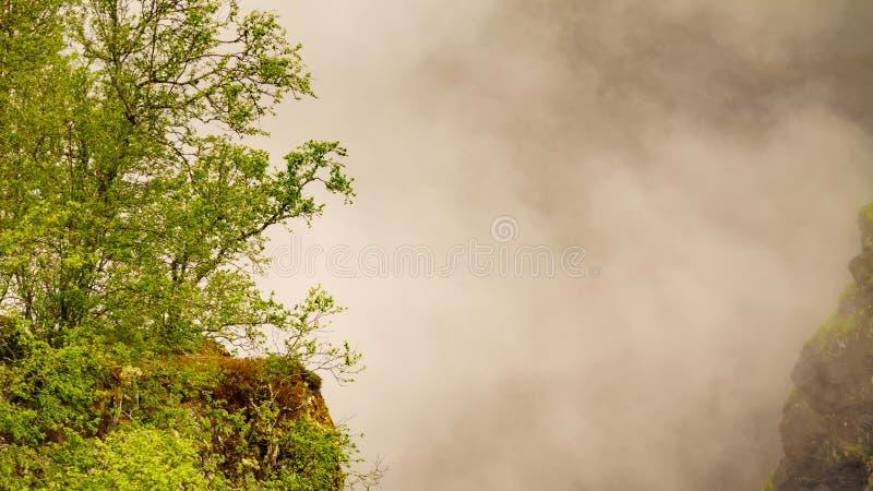 Naturaleza brumosa de niebla del verde del paisaje en Noruega imágenes de archivo libres de regalías