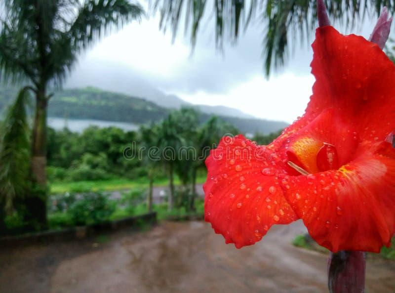 Naturaleza con las montañas y el lirio rojo imagen de archivo libre de regalías