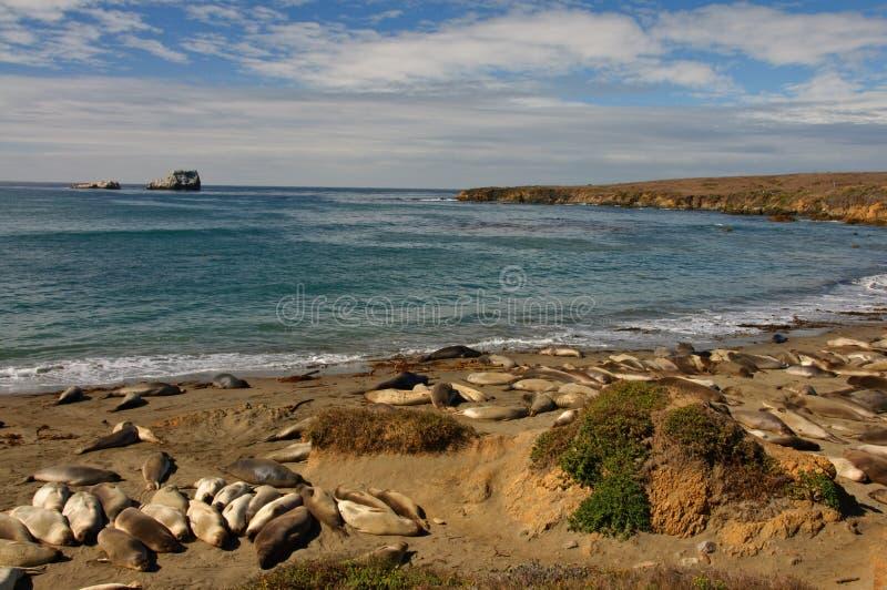 Naturaleza costera escénica del paisaje marino con los sellos en la playa imagenes de archivo