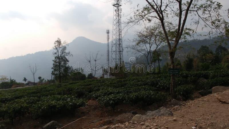Naturaleza de belleza de Darjeeling India foto de archivo