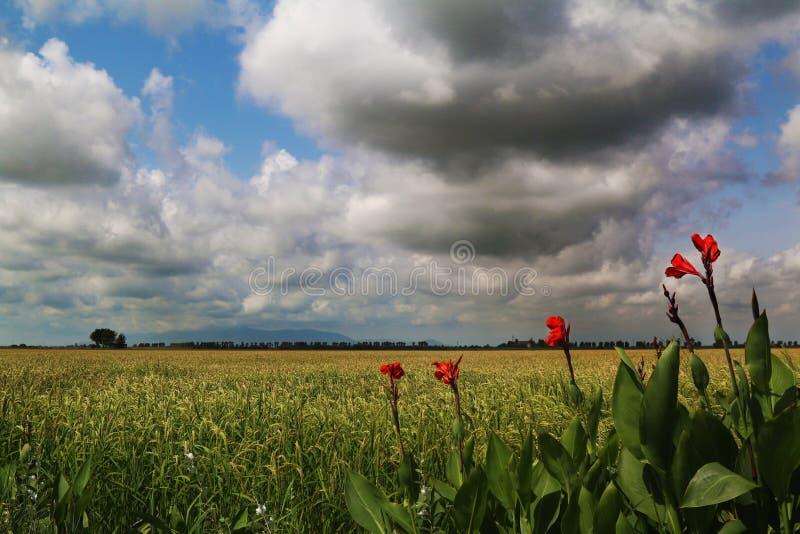 Naturaleza de Cataluña, de España y paisajes Viaje de Europa wanderlust fotografía de archivo