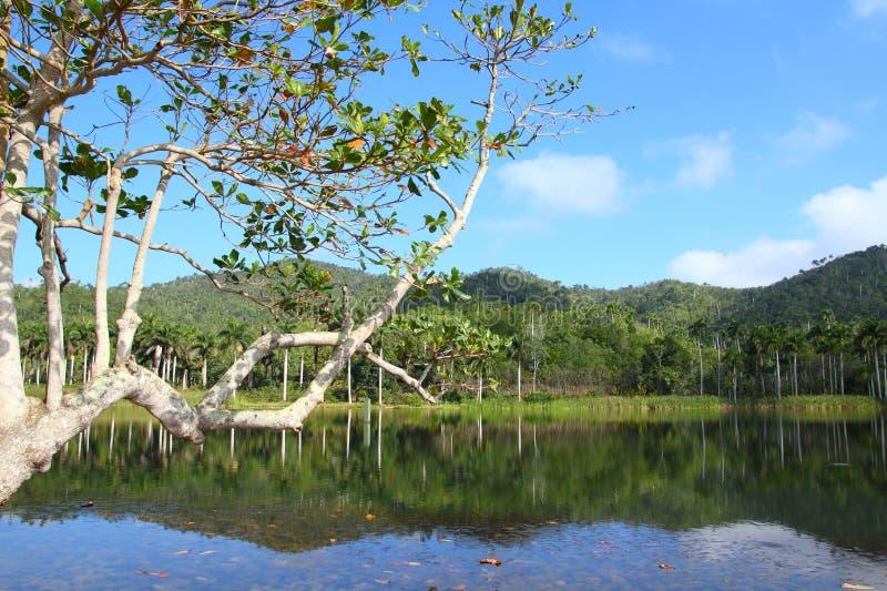 Naturaleza de Cuba imagen de archivo