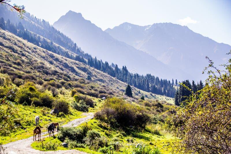 Naturaleza de Kirgiz del área de Kol del Ala foto de archivo libre de regalías