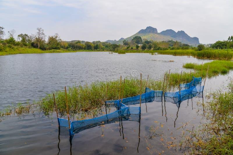 Naturaleza de la charca de la trampa de los pescados foto de archivo