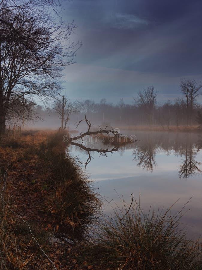 Naturaleza de la niebla de la mañana foto de archivo libre de regalías