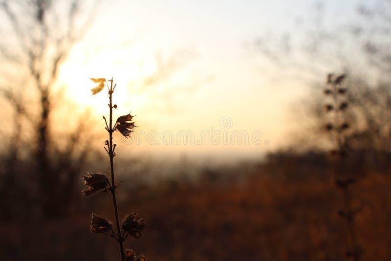 Naturaleza de la puesta del sol fotografía de archivo libre de regalías