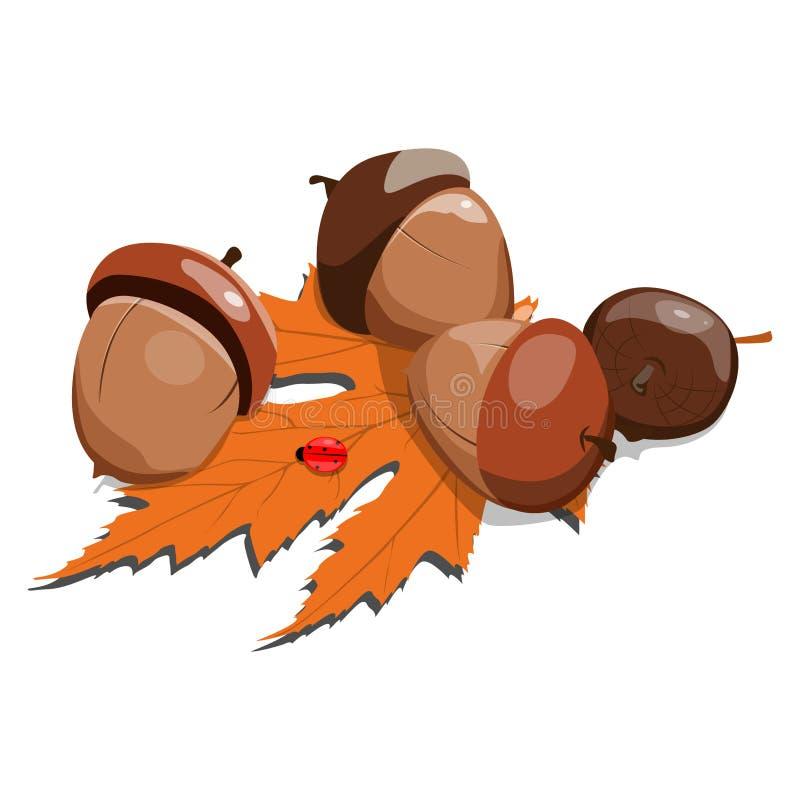 naturaleza de las memorias de los días de fiesta del día soleado del otoño de la mariquita de la hoja del otoño de las bellotas ilustración del vector