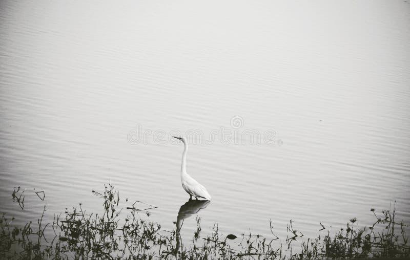 Naturaleza de los cuentos del pato imagenes de archivo