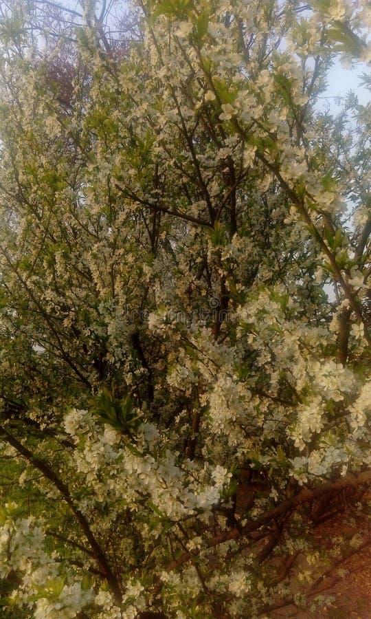 Naturaleza del árbol imagenes de archivo