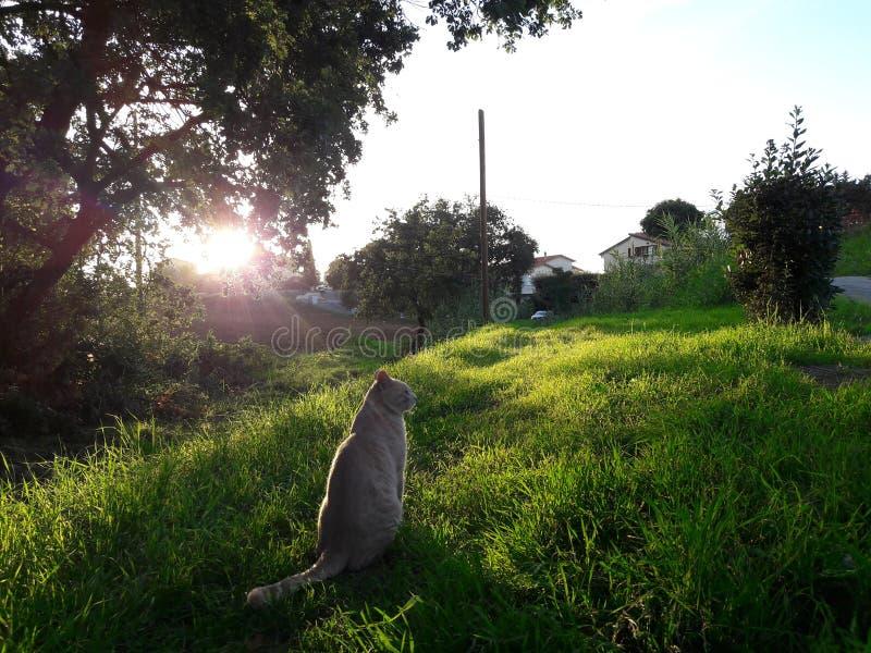 Naturaleza del gato imagen de archivo libre de regalías