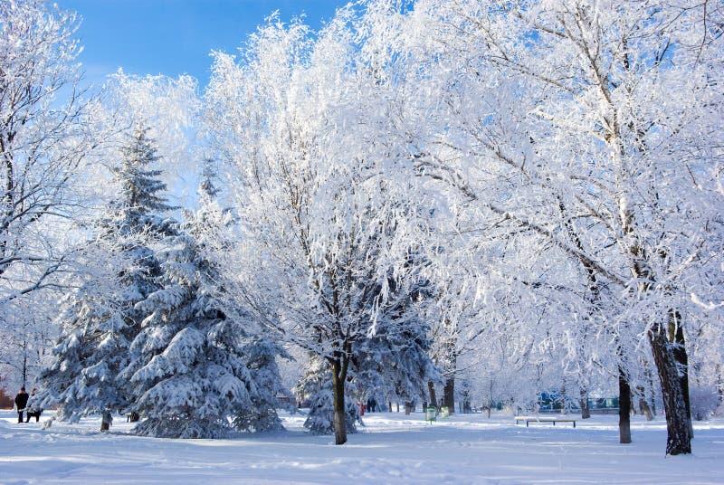 Naturaleza del invierno fotos de archivo