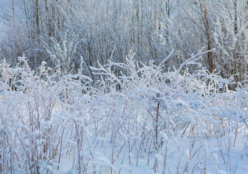 Naturaleza del invierno en un día soleado imágenes de archivo libres de regalías