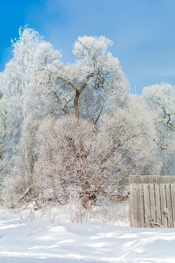 Naturaleza del invierno en un día soleado fotografía de archivo libre de regalías
