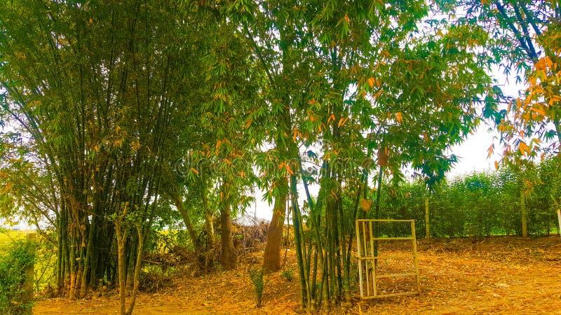 Naturaleza del jardín de los árboles del árbol de Greenry de la puerta de los bambúes fotografía de archivo libre de regalías