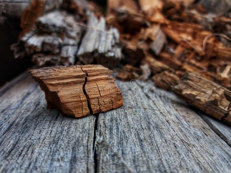 Naturaleza del otoño foto de archivo