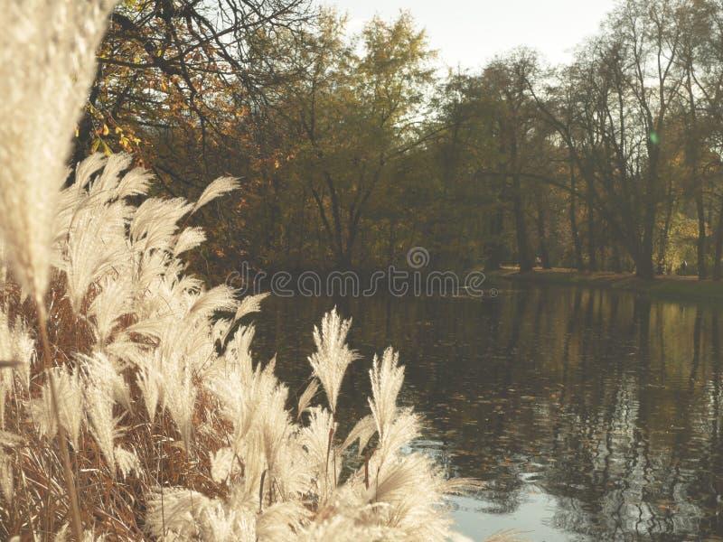 Naturaleza del otoño de los árboles del parque fotos de archivo