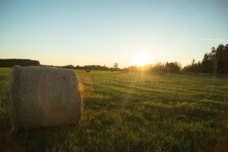 Naturaleza del país con el campo de cereal grande imágenes de archivo libres de regalías