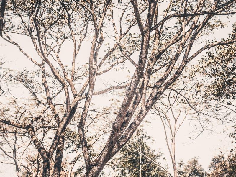 Naturaleza del primer del árbol y de troncos imágenes de archivo libres de regalías