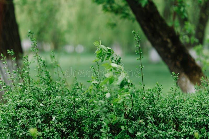 Naturaleza del resorte Paisaje hermoso Fondo tranquilo imagenes de archivo