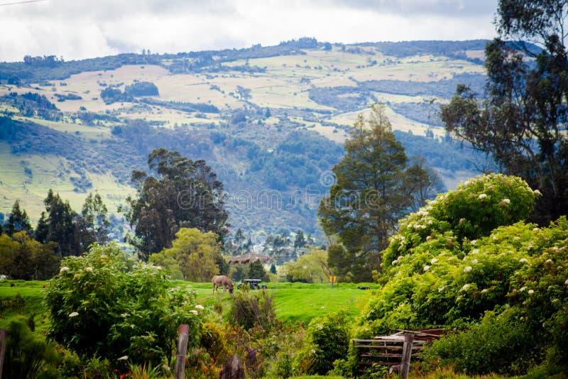 Naturaleza del resorte Paisaje hermoso Parque con la hierba verde y el Tr foto de archivo libre de regalías