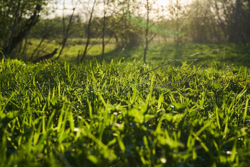 Naturaleza del resorte Paisaje hermoso Parque con la hierba verde y los ?rboles fotos de archivo
