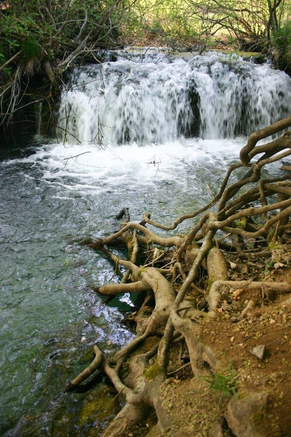 Naturaleza del servio de Lisine fotos de archivo