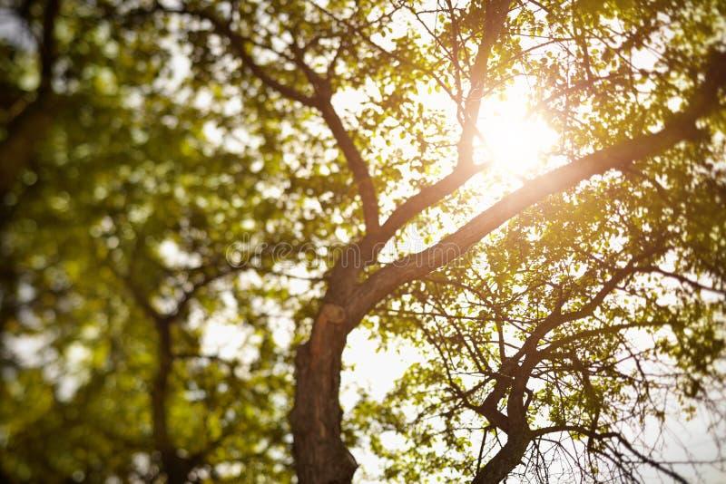 Naturaleza del verano fotografía de archivo
