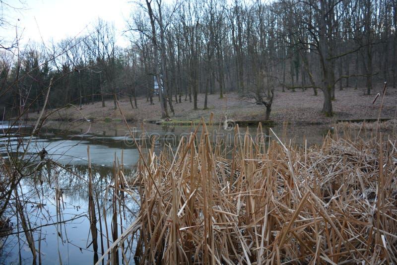Naturaleza durante el invierno en Belgrado imagen de archivo libre de regalías