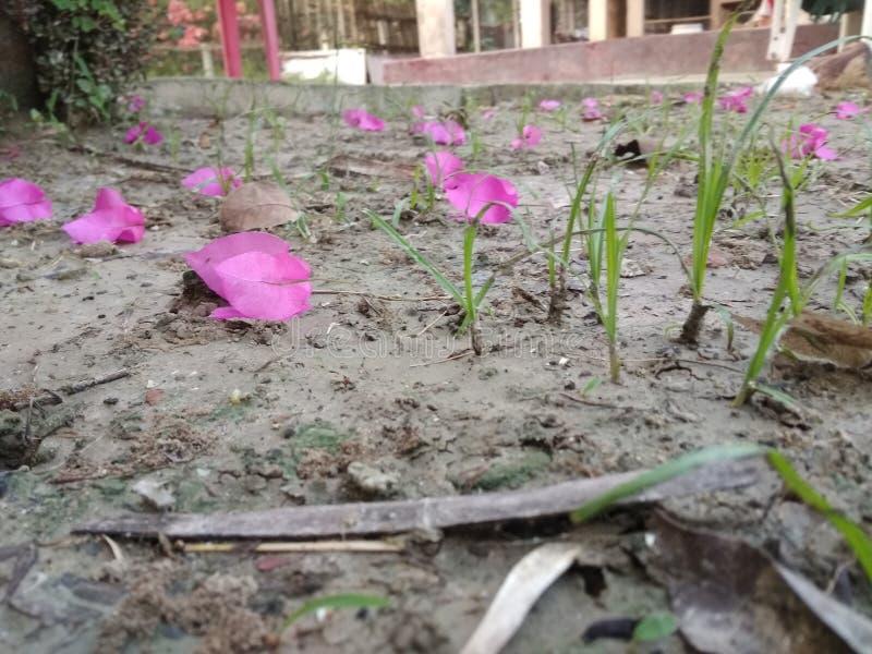 Naturaleza en Bangladesh imagen de archivo libre de regalías