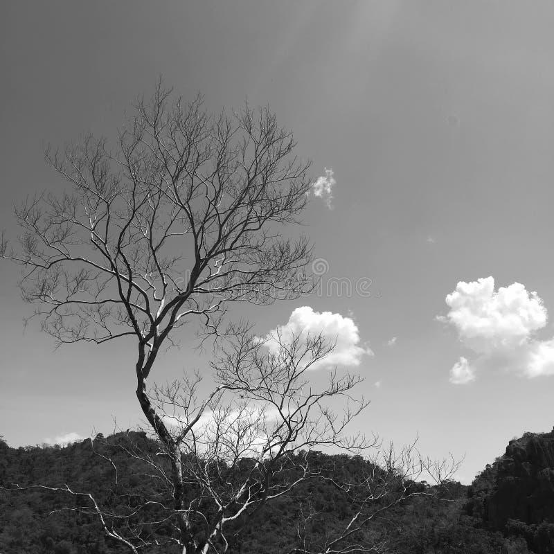 Naturaleza en blanco y negro imagenes de archivo