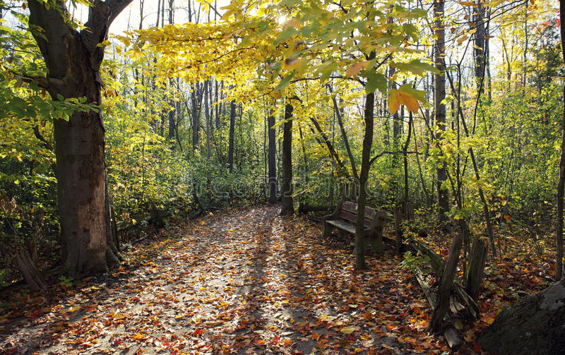 Naturaleza en color de la caída foto de archivo libre de regalías