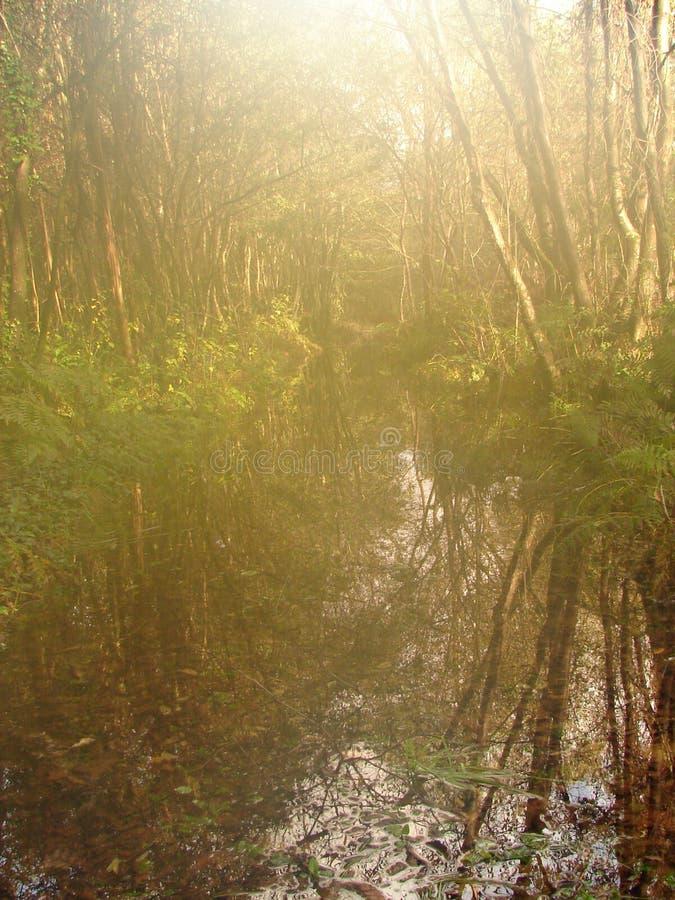 Naturaleza en el myst imagen de archivo