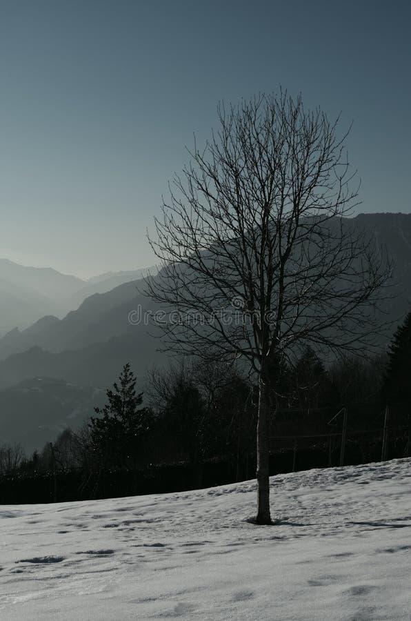 Naturaleza en invierno foto de archivo