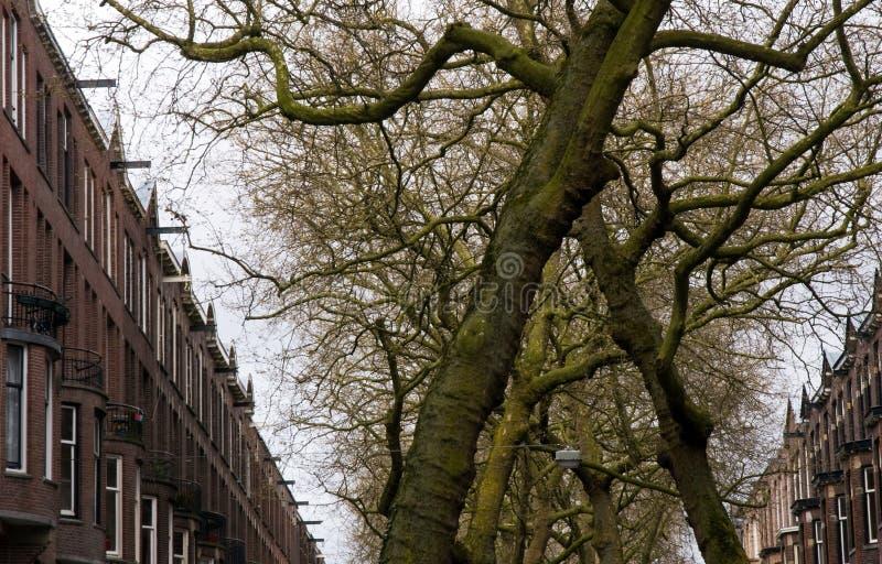 Naturaleza en la ciudad imagen de archivo
