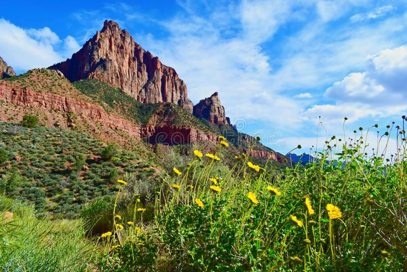 Naturaleza floreciente hermosa de la montaña de la primavera, Zion National Park, Utah, los E.E.U.U. foto de archivo libre de regalías