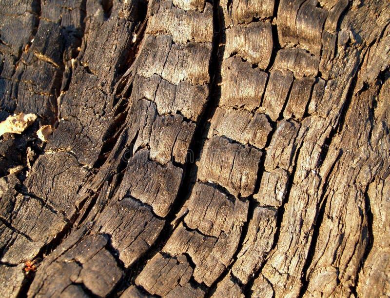 Naturaleza - fondo imagen de archivo libre de regalías