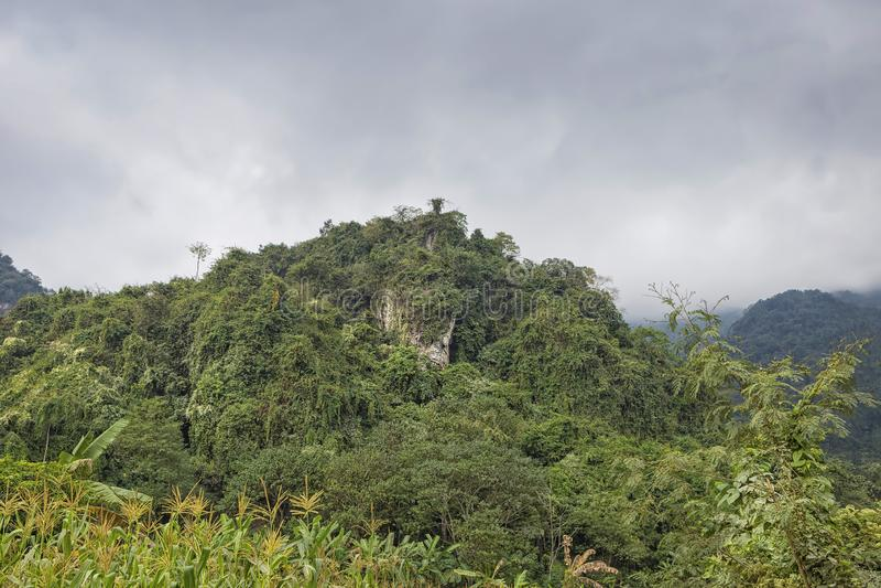 Naturaleza hermosa del paisaje Planta verde y árbol en la montaña de la selva tropical imagen de archivo libre de regalías