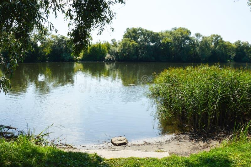 Naturaleza hermosa del verano, río y árboles verdes fotos de archivo libres de regalías