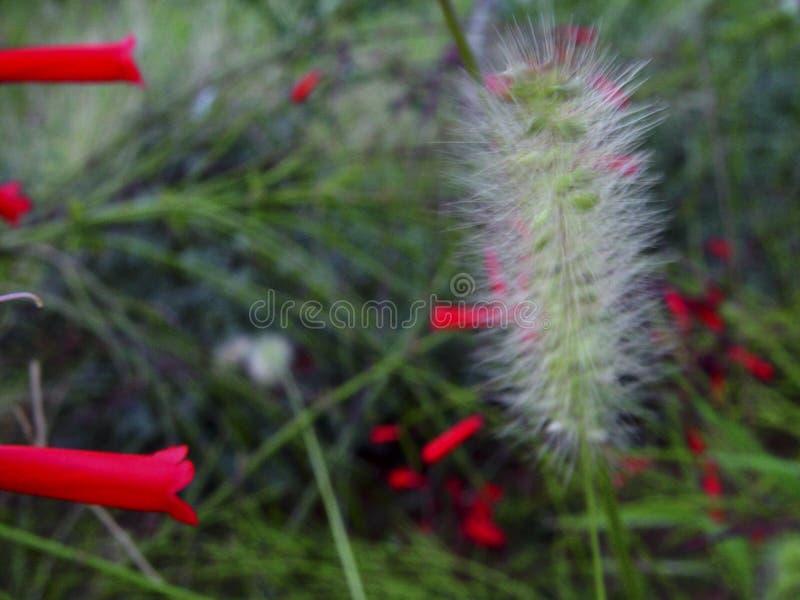Naturaleza hermosa en Líbano del norte imagenes de archivo