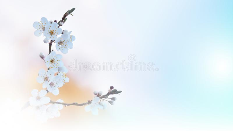 Naturaleza hermosa Fotografía del arte Diseño de la fantasía Fondo creativo de la primavera Papel pintado natural blanco Copie el imagen de archivo