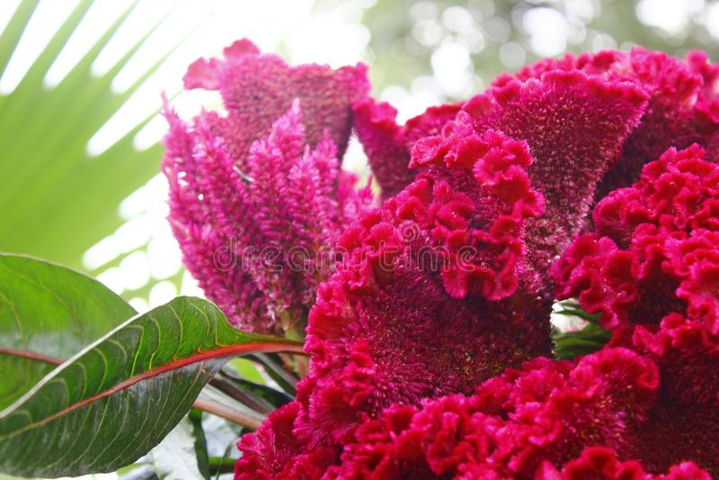 Naturaleza hermosa por la mañana imágenes de archivo libres de regalías