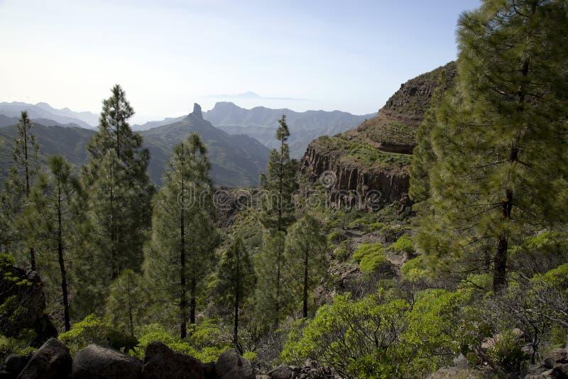 Naturaleza imponente en el más forrest de Gran Canaria, Canarias debajo de la bandera española foto de archivo libre de regalías